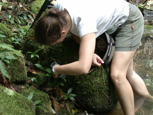 Jodi Rowley recording frog body temperature