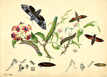 One of Scott Sisters' illustrations